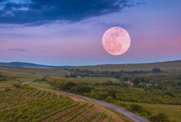 ciclo de la luna en el vino