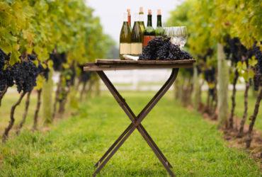 vinos no intervenidos que son