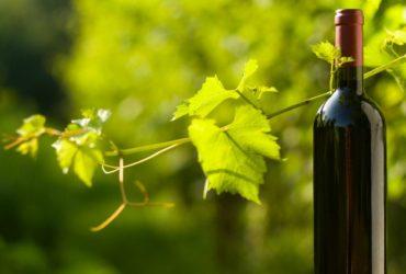 que son los vinos ecologicos y biodinamicos