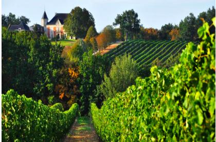 vinos famosos y caros de burdeos